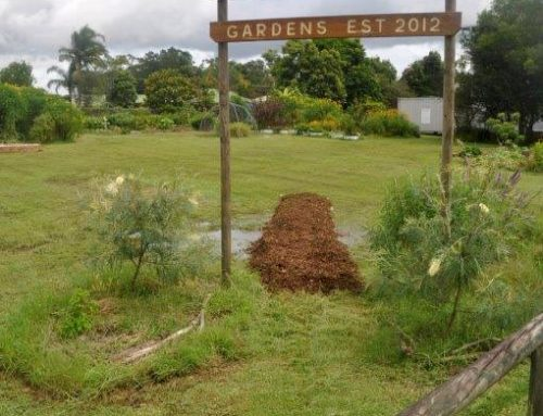 Cooroy Community Permaculture Gardens (CCPG)