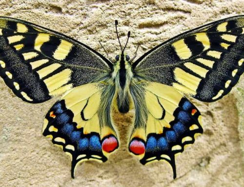 Help Save The Butterfly!