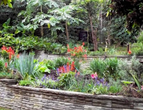 Open Garden Morag Gamble October 2019