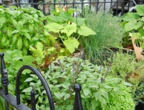 Permaculture For Renters – by Heather Jo Flores