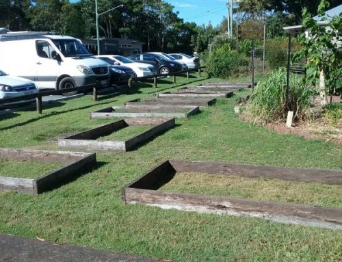 A CCPG Update! Cooroy Community Permaculture Gardens